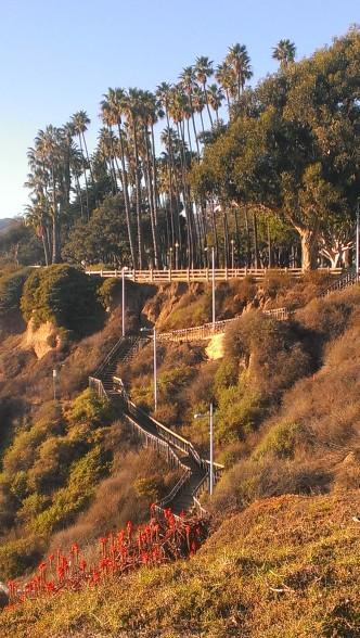 samo.montana steps