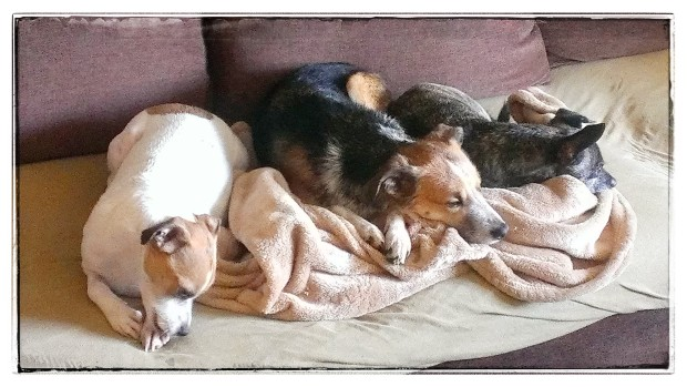 """The Afterbath. Bernardo, Charlie, Tiger: """"Fine. But we don't have to like it."""""""