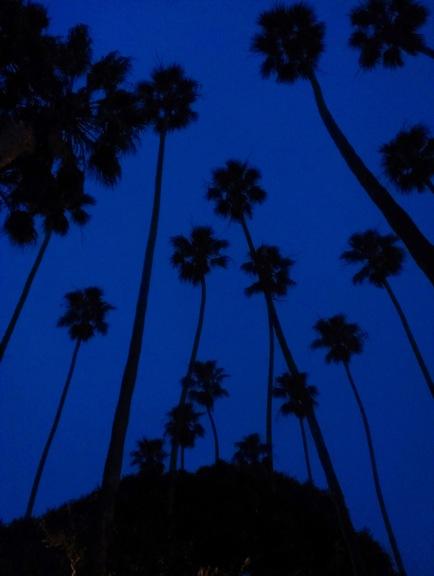 dark palms.samo