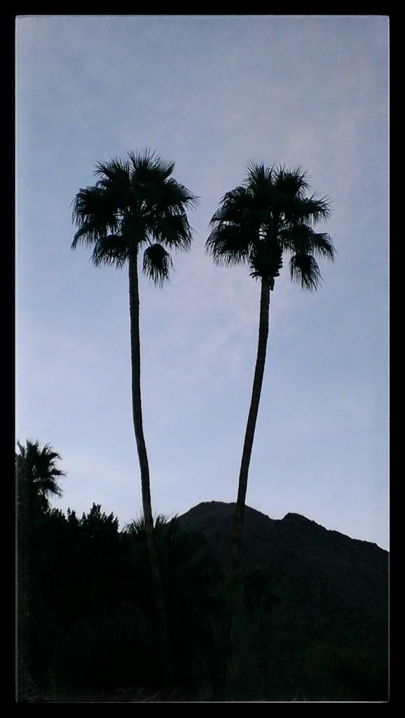 palm-palm