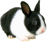 rabbit-710