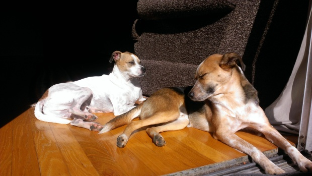 bernardo.charlie.sunbath