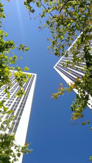 centuryplaza.trees