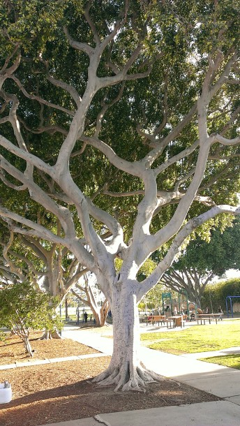 playground.tree